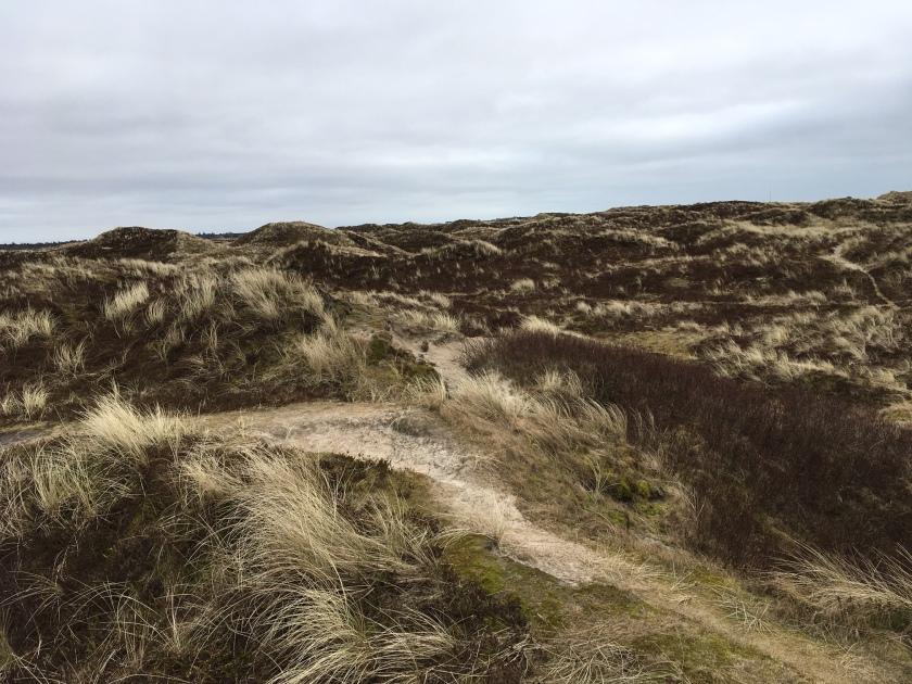 Dune landscape Fanoe
